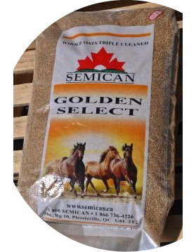 Semican International Golden Select Crimped Oats
