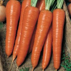 Carrot, Danver's Half Long