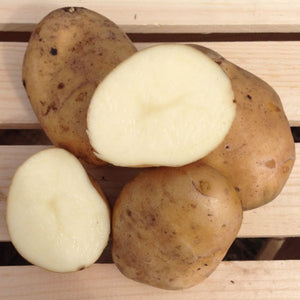 Kennebec Potato