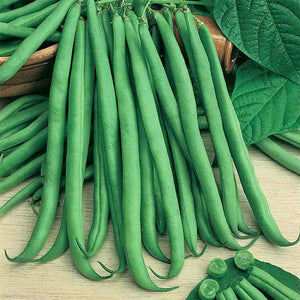 Burpee Stringless Greenpod Bush Bean