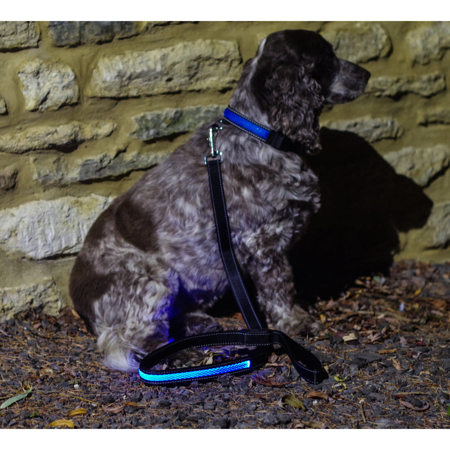 Blue LED Light up Dog Lead