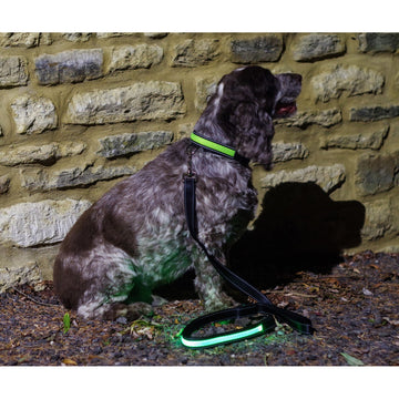 Green LED Light up Dog Lead