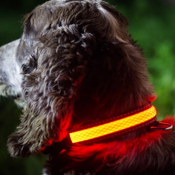 Pink LED Light up Pet Collar | Safe & Visible