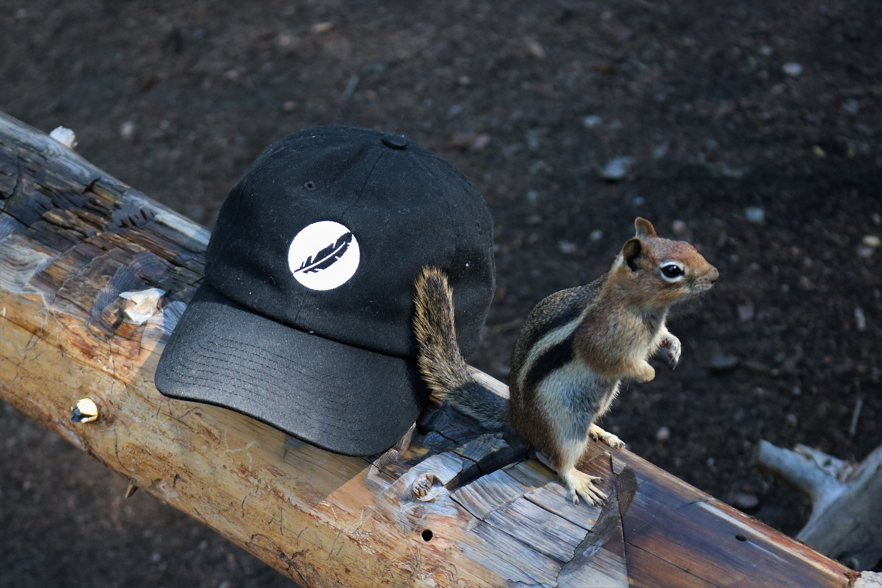 Squirrel Sitting right next to Avian Hat
