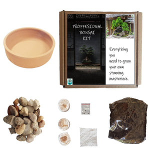 Bonsai Grow kit Widdringtonia Cedarbergensis Terra pot