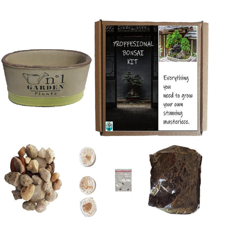Bonsai home grow gift kit indigenous tree's - choose species from drop down