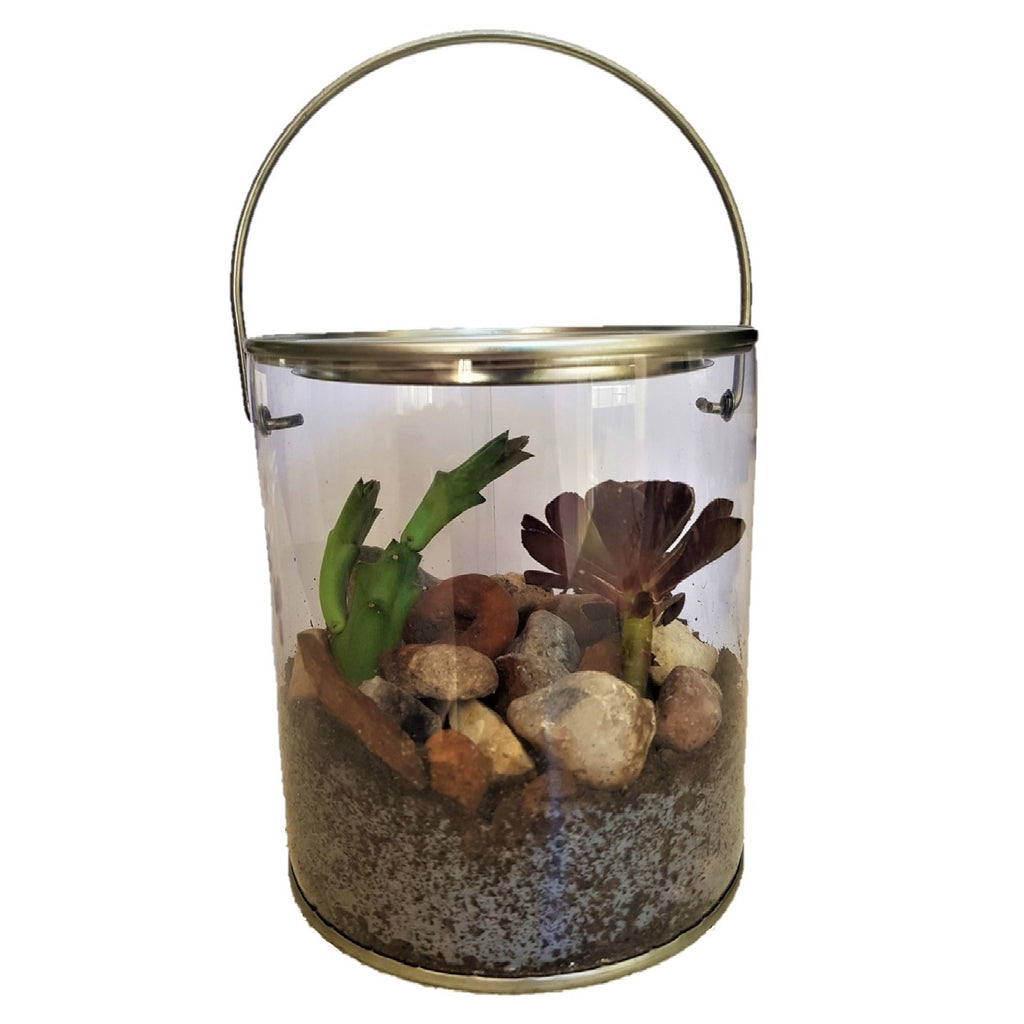 Seedleme succulent terrarium in hanger pot with live succulents - Super Easy plug and play succulent gift box
