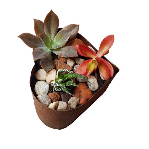Image of Seedleme Rusty Heart succulent planter D.I.Y kit - Assorted Succulents, soil and pebbles ready to plant