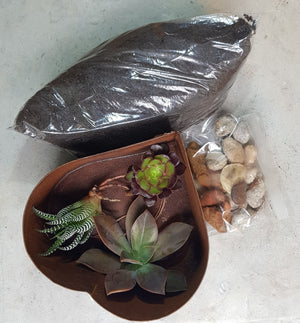 Seedleme Rusty Heart succulent planter D.I.Y kit - Assorted Succulents, soil and pebbles ready to plant