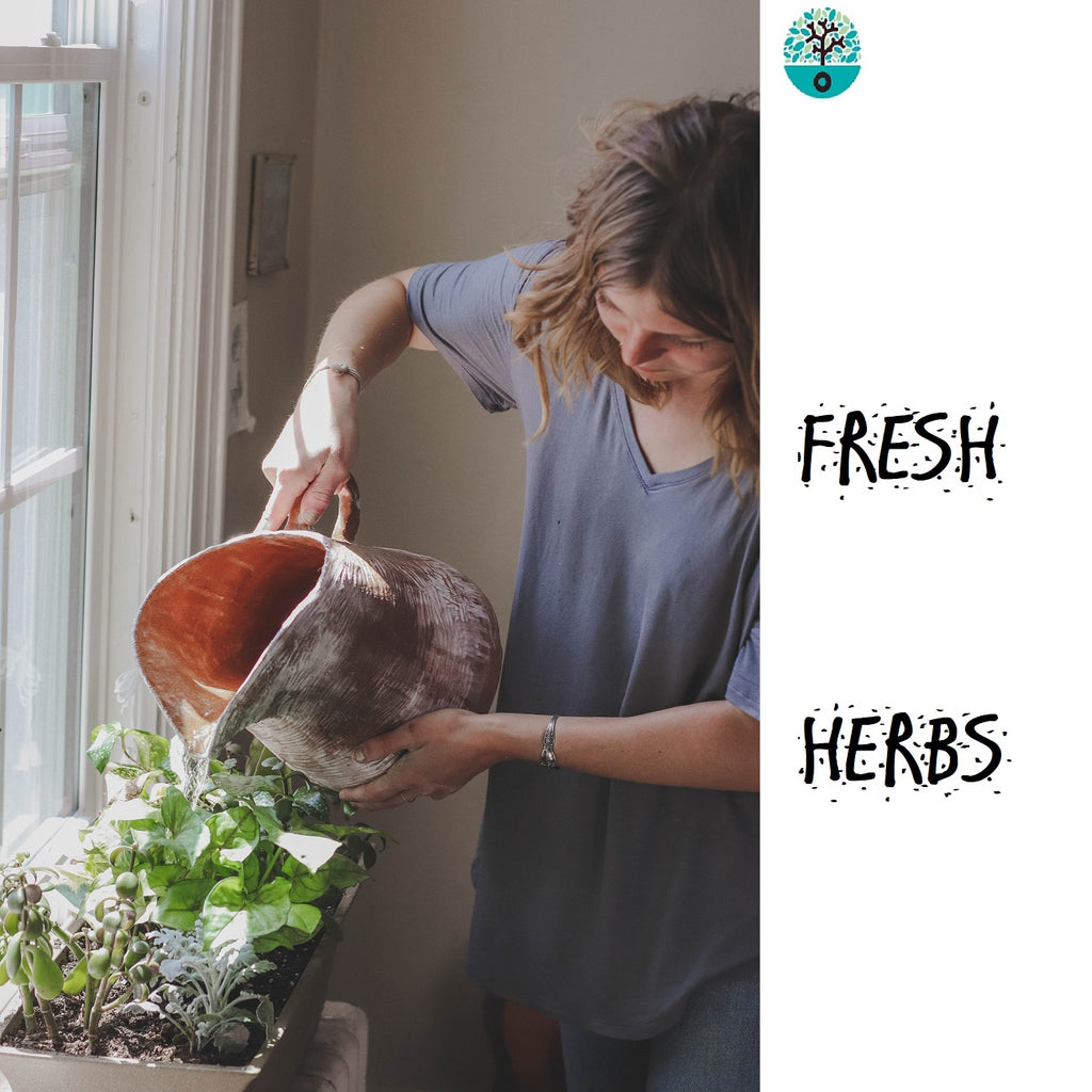 Herb Growing Kit with Tomato, Carrots, Chili, Onion and Lettuces Seeds