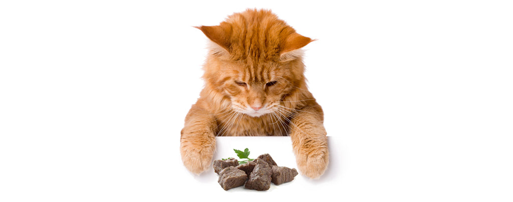 Healthy treats for cats: 10 Human foods that are safe for cats