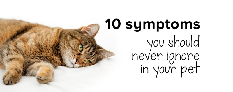 10 symptoms you should never ignore in your pet