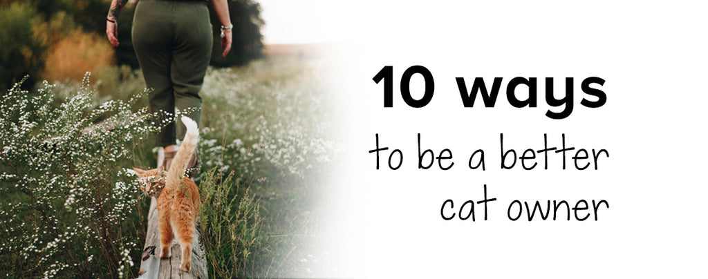 10 ways to be a better cat owner