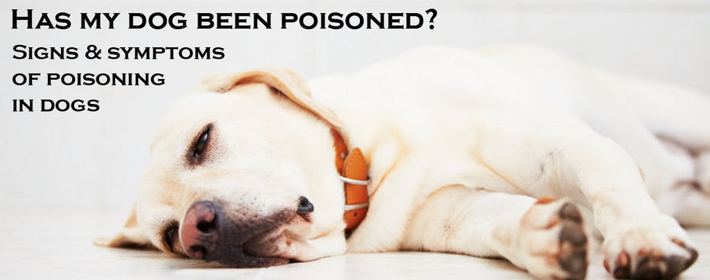 Has my dog been poisoned? Signs & symptoms of poisoning in dogs