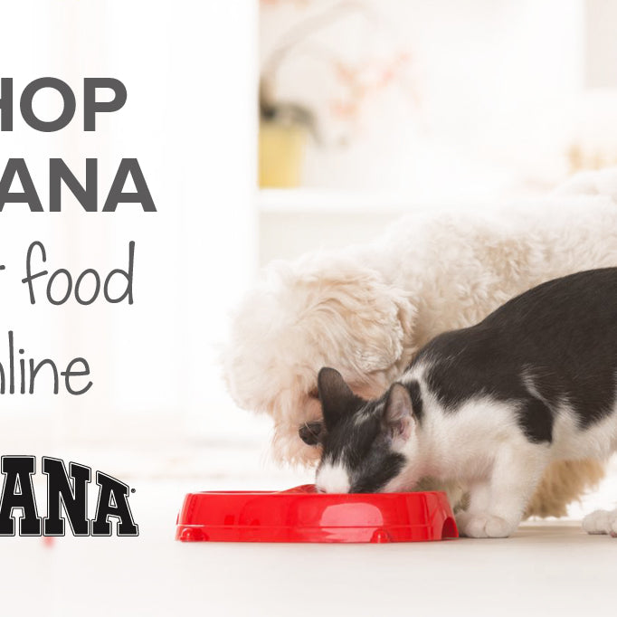 Shop Acana pet food online | Buy cat & dog food South Africa