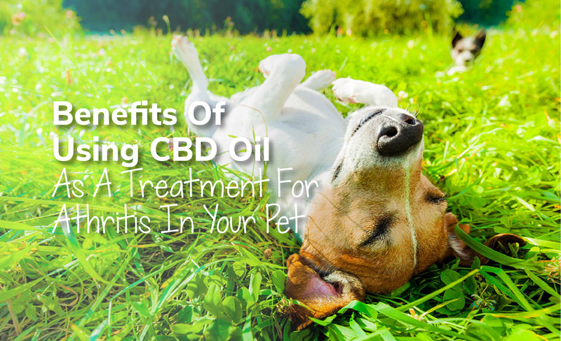 Benefits Of Using CBD Oil As A Treatment For Arthritis In Your Pet