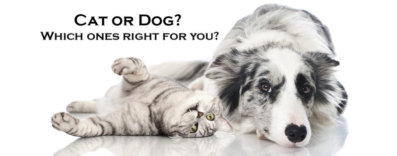 Should I get a dog or a cat? 5 Questions to give you paws for thought