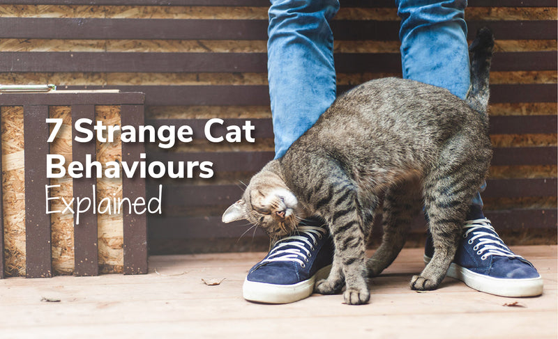 7 Strange Cat Behaviours Explained