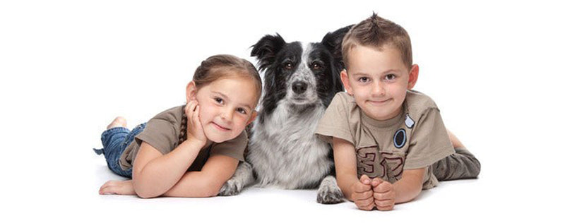Children's safety around dogs: How to help prevent dog bites