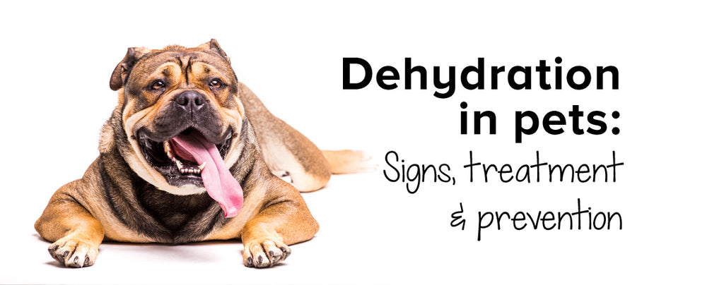 Dehydration in pets: Signs, treatment & prevention
