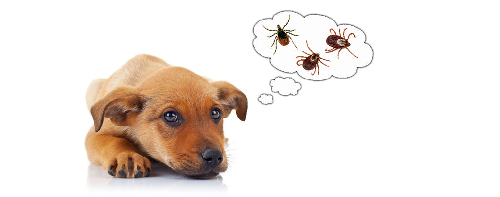 4 Things you need to know about tick control for dogs