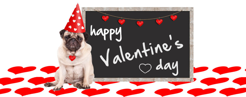 How to spoil your dog on valentine's day | Healthy homemade dog treats