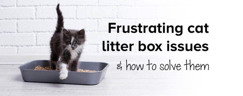 Frustrating cat litter box issues & how to solve them
