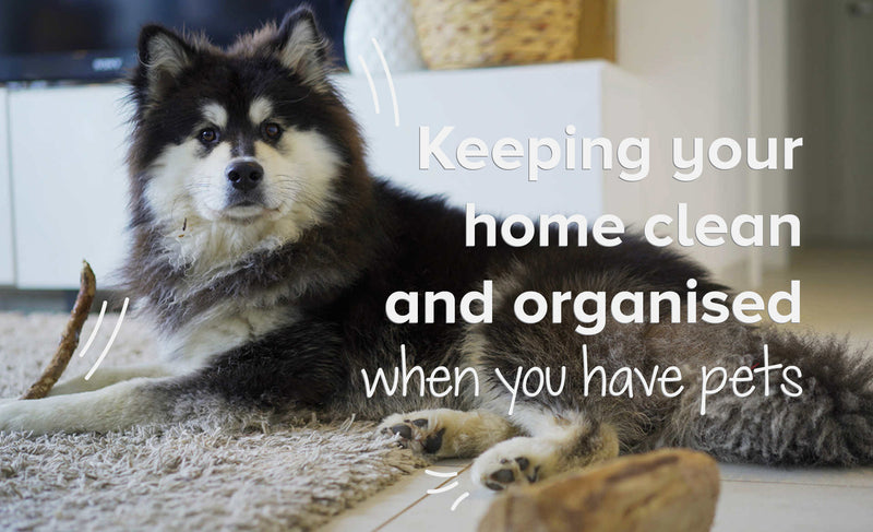 Keeping Your Home Clean And Organised When You Have Pets