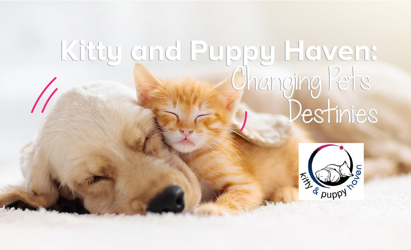 Kitty And Puppy Haven: Changing Pets Destinies