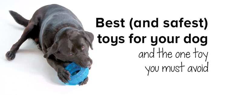 Best (and safest) toys for your dog - and the one toy you must avoid