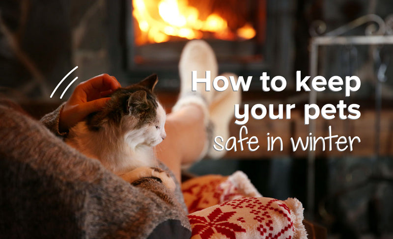 How To Keep Your Pets Safe In Winter