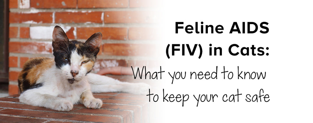 Feline AIDS (FIV) in Cats: What you need to know to keep your cat safe