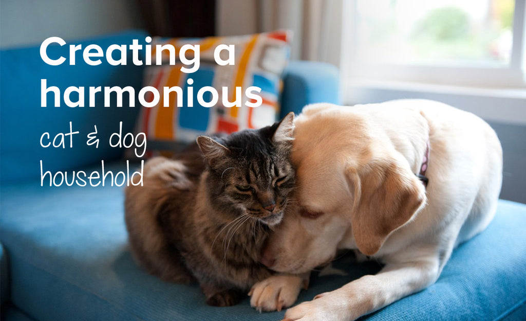 How to have a harmonious cat and dog household | Pet advice