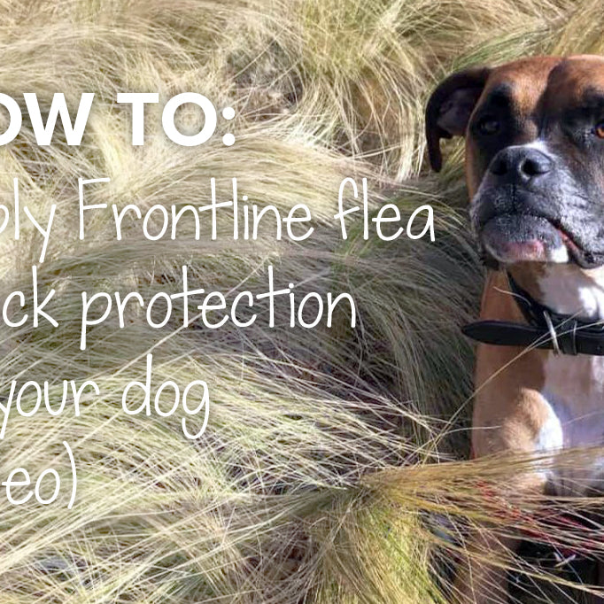 How to apply Frontline flea & tick protection to your dog | Zuki pet