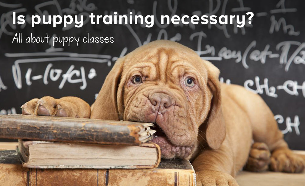 Is puppy training necessary? | All about puppy classes