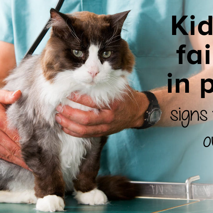 Kidney failure in pets: what you need to know