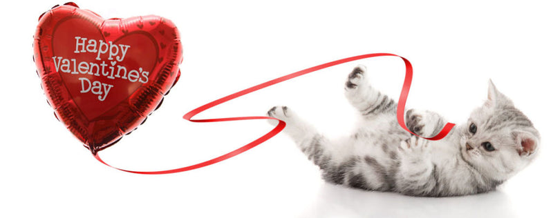How to spoil your cat on valentine's day | Healthy cat treat recipes