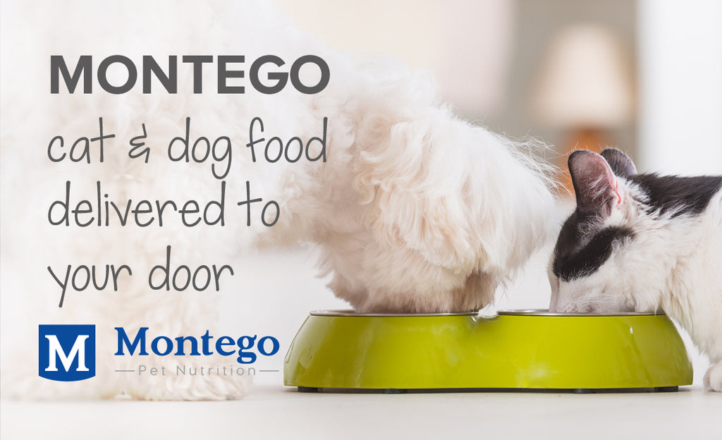 Montego cat & dog food delivered to your door | Pet food delivery