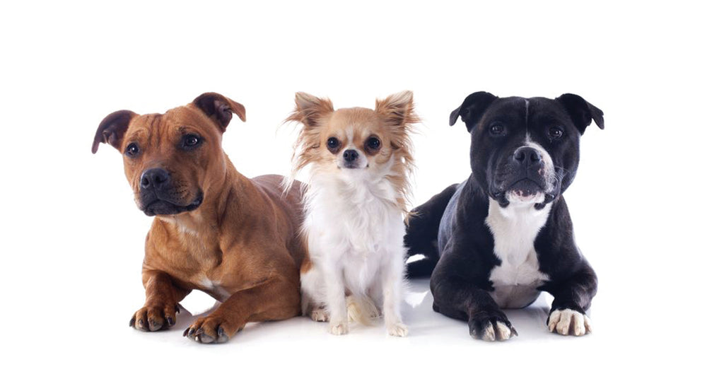 6 Tips for managing a multi-dog household