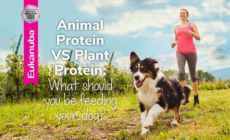 Animal Protein Vs Plant Protein: What Should You Be Feeding Your Dog?
