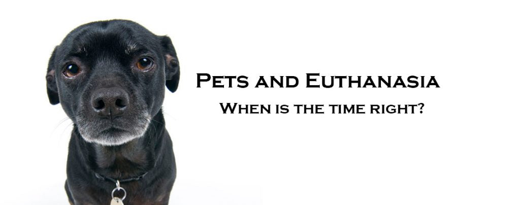 Pets and Euthanasia: When  is the time right, and what does it entail