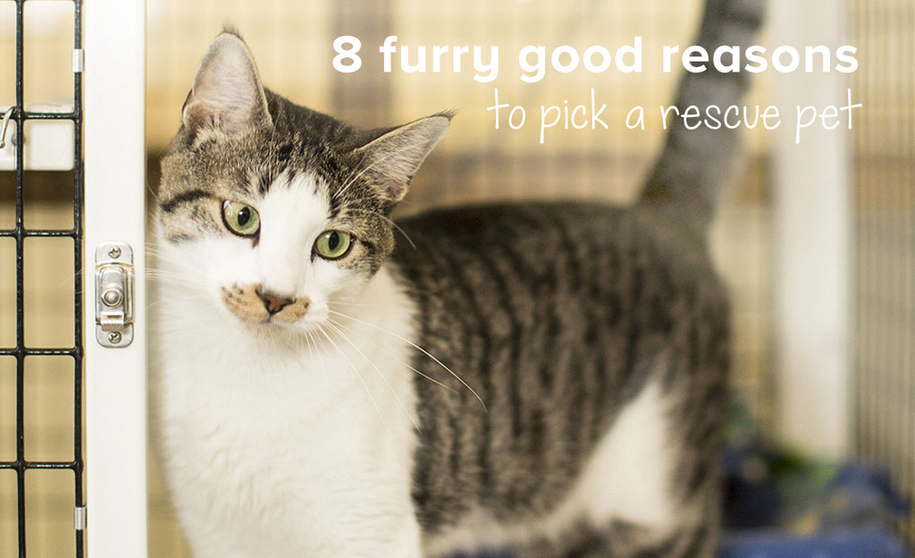 8 Great reasons to pick a rescue pet