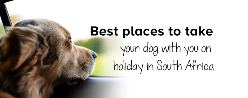 Best places to take your dog with you on holiday in SA