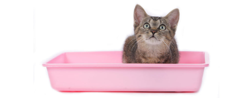 How to litter train your kitten: 10 cat house-training tips from a vet