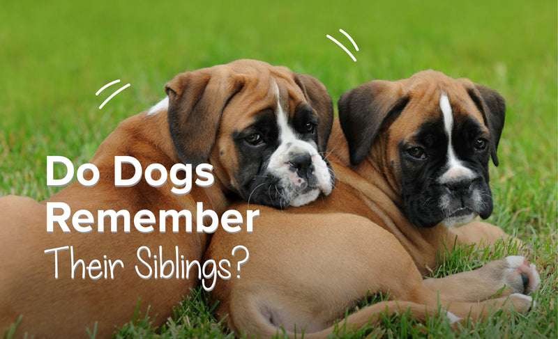 Do Dogs Remember Their Siblings?