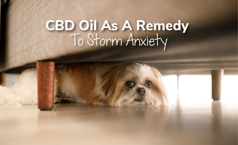 The Benefits Of Using CBD Oil As A Remedy To Storm Anxiety