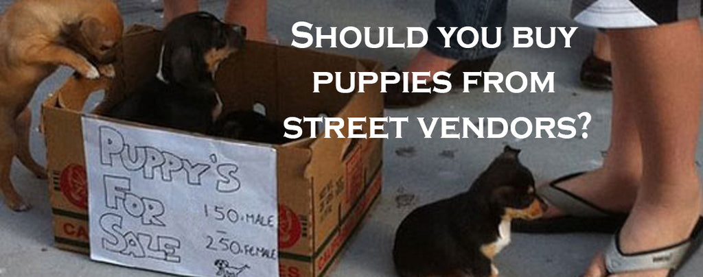 Should you buy puppies from street vendors? Our vet answers this contentious question