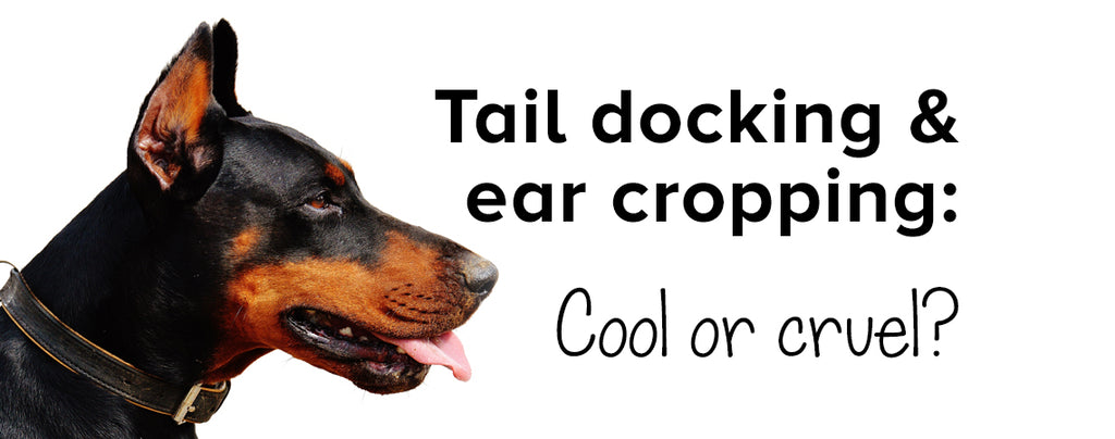 Tail docking & ear cropping: cool or cruel? Here's the answer.