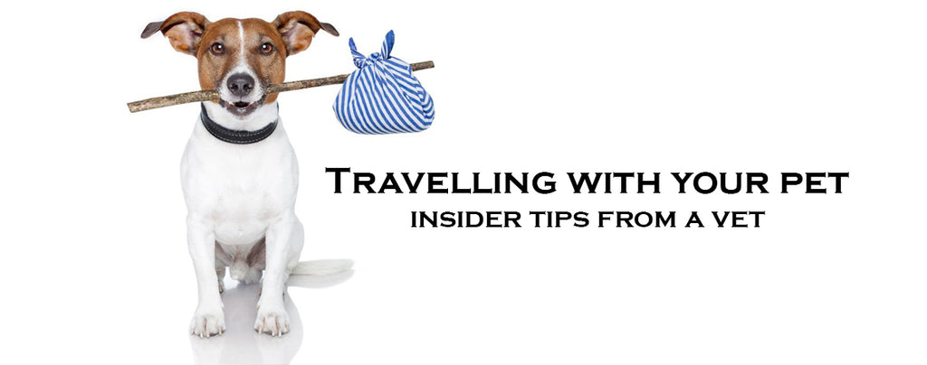 Travelling long distance with your pet: Insider tips from a vet