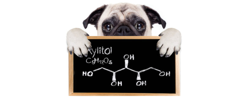 Xylitol poisoning  in dogs